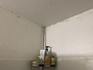 Bathroom, Fan , Vent, Mold
